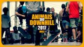 Animais do Downhill 2017 - Masculino - By Narinho Guita!